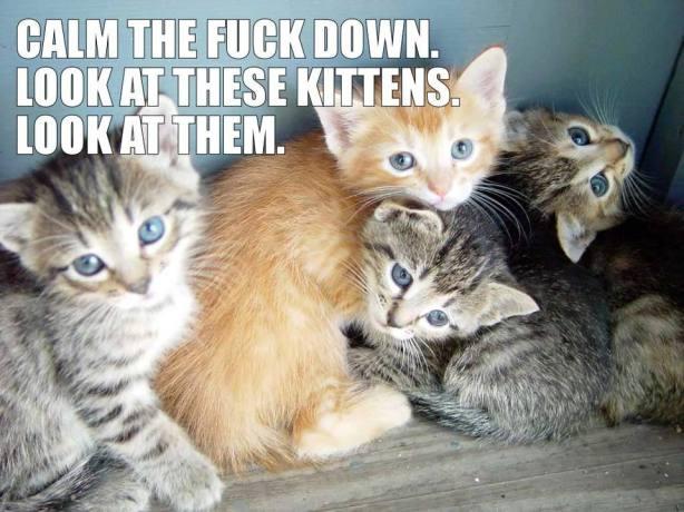 fucking fubsy kittehs
