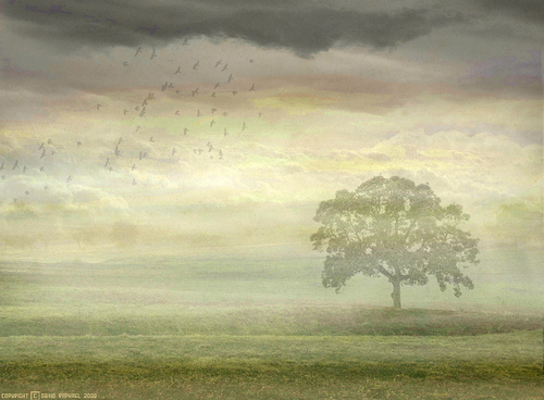 Genesis- Wind and Wuthering
