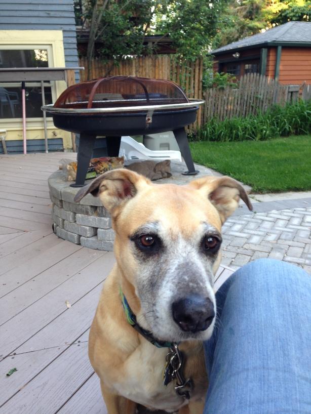 """the quintessential """"all bark no bit"""" guard dog"""